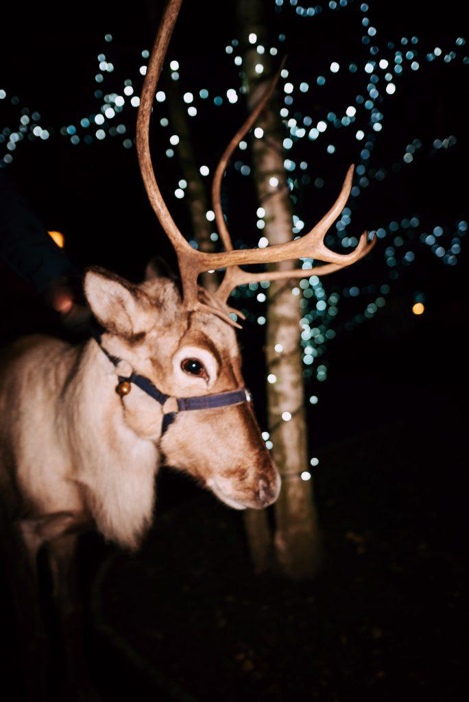 Reindeer Visits